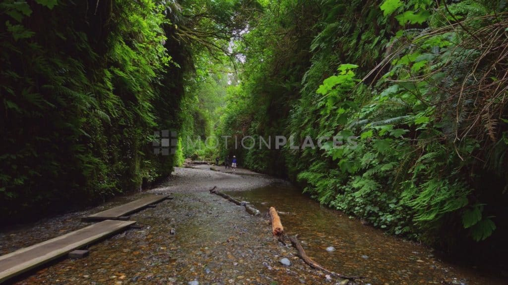 Fern Canyon Hikers Stock Footage