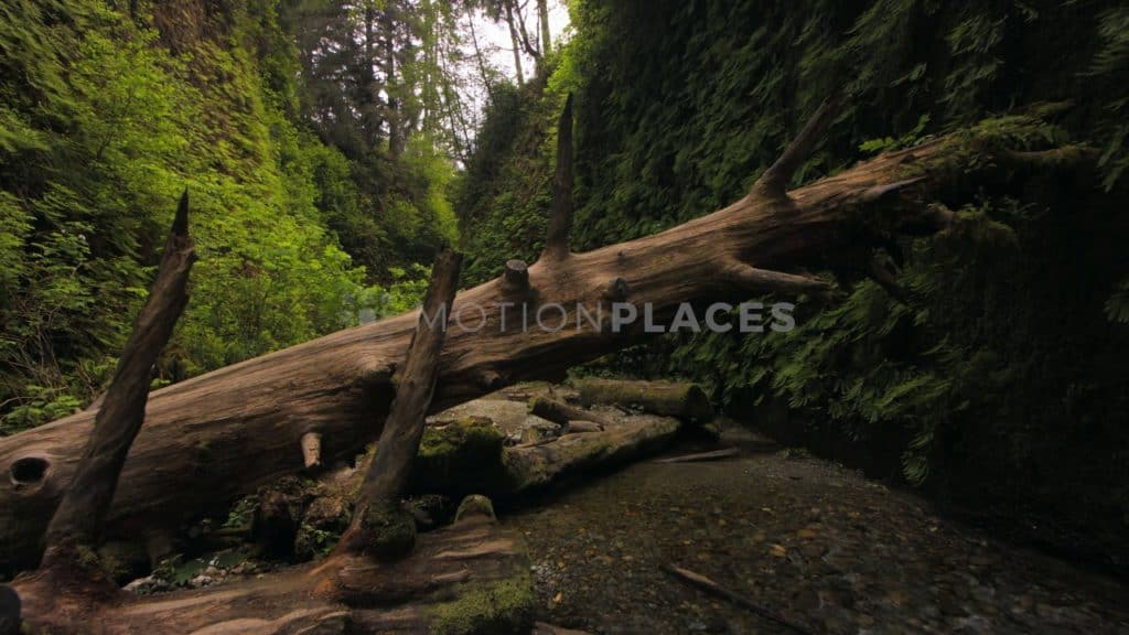Walk Through Fern Canyon Stock Footage. Download our free HD video footage, or purchase high quality 4K clips. Royalty Free licensing.