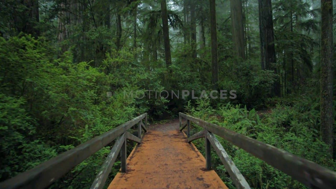 Redwood Forest Bridge Stock Footage by Motion Places. Download our free HD video footage, or purchase high quality 4K clips. Royalty Free licensing.