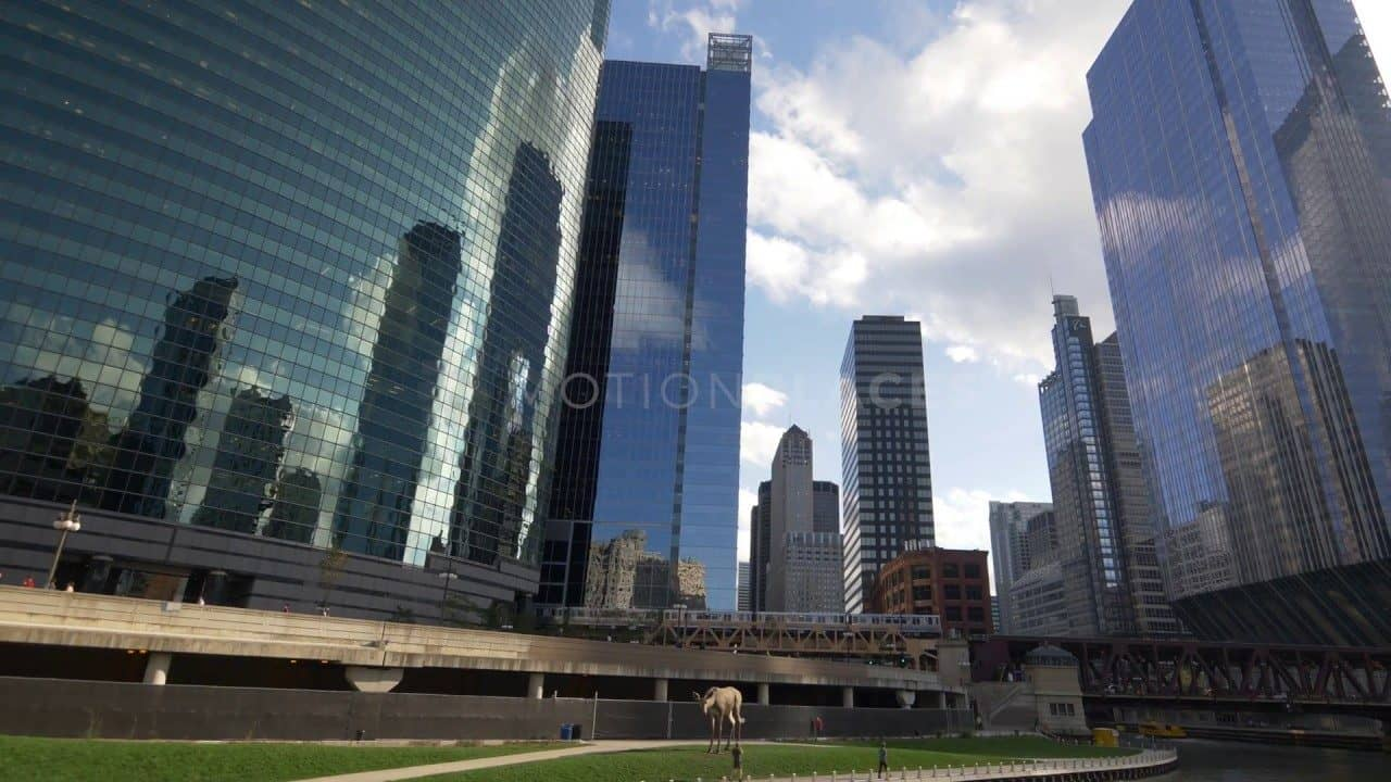 Chicago River Cityscape Stock Footage by Motion Places. Download our free HD video footage, or purchase high quality 4K clips. Royalty Free licensing.