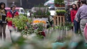 Hong Kong Flower Market Free Stock Footage by Motion Places. Download our free HD video footage, or purchase high quality 4K clips. Royalty Free licensing.