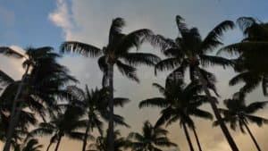 Miami Beach Sunset Palm Trees Free Stock Footage by Motion Places. Download our free HD video footage, or purchase high quality 4K clips. Royalty Free licensing.
