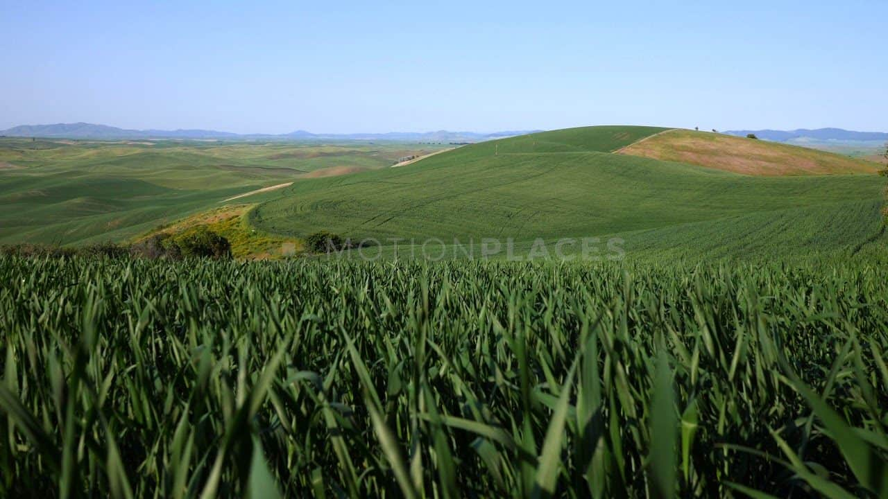 Green Wheat Field Free Stock Footage by Motion Places. Download our free HD video footage, or purchase high quality 4K clips. Royalty Free licensing.