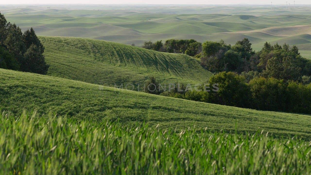 Green Wheat Field Rolling Hills Stock Footage by Motion Places. Download our free HD video footage, or purchase high quality 4K clips. Royalty Free licensing.