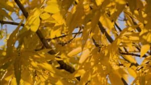 Autumn Yellow Leaves Free Stock Footage by Motion Places. Download our free HD video footage, or purchase high quality 4K clips. Royalty Free licensing.