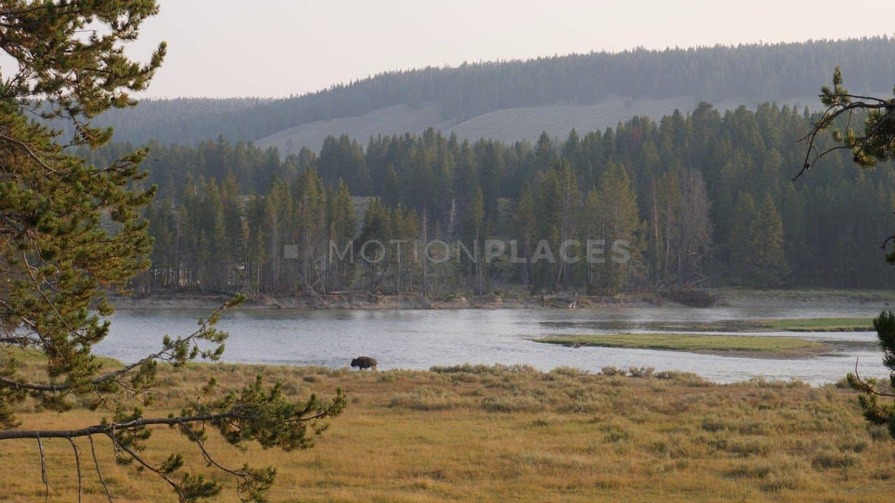 Yellowstone Lone Bison Free Stock Footage