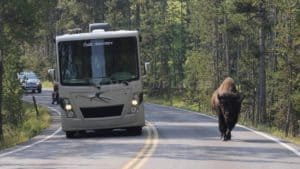 Yellowstone Road Trip Bison Stock Footage by Motion Places. Download our free HD video footage, or purchase high quality 4K clips. Royalty Free licensing.