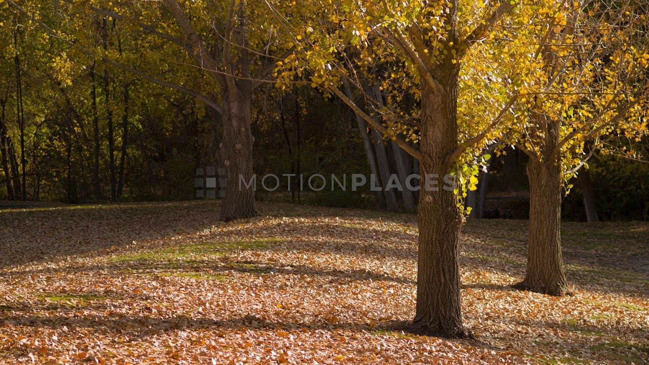 Autumn Trees Free Stock Footage by Motion Places. Download our free HD video footage, or purchase high quality 4K clips. Royalty Free licensing.